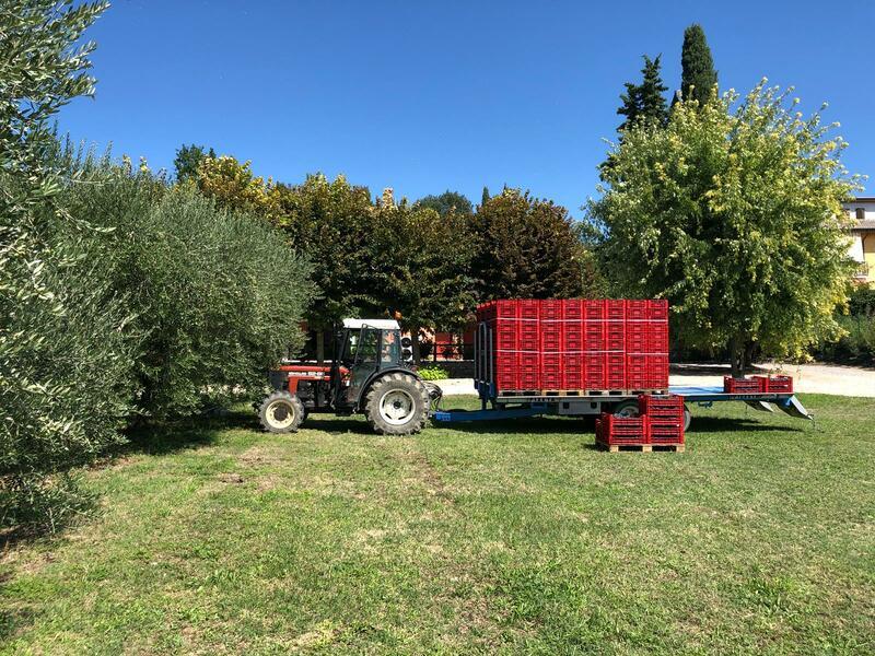 Agriturismo Al Colle - die Landschaft